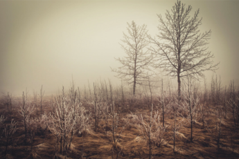 Cold Morning Trees